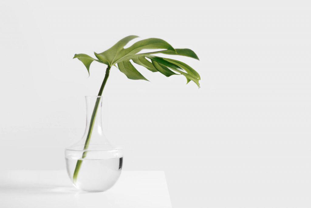 Planta en jarrón